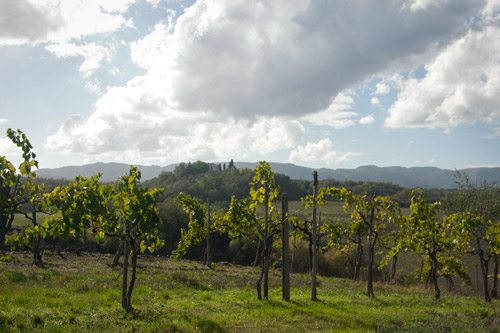 pancole-vineyard