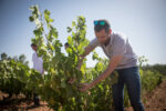Albert Costa observing a vine in the are of Meknès, Morocco
