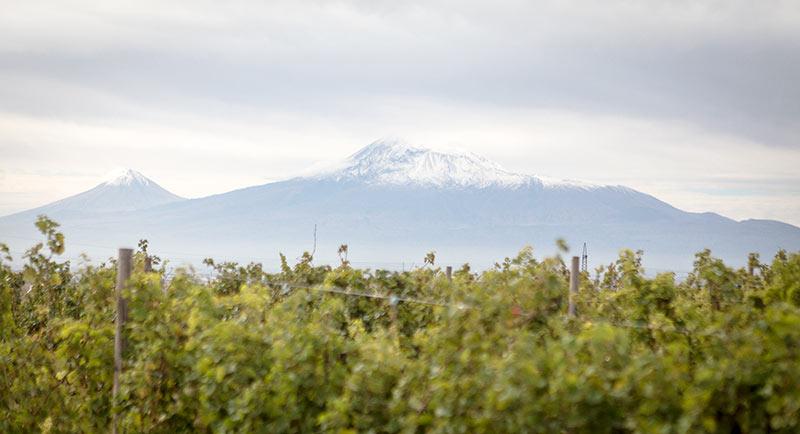 Mount Ararat and new vineyards