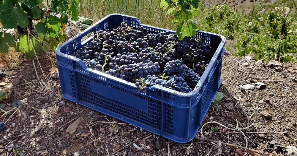 10 Grenaches for the 10th annual #GrenacheDay