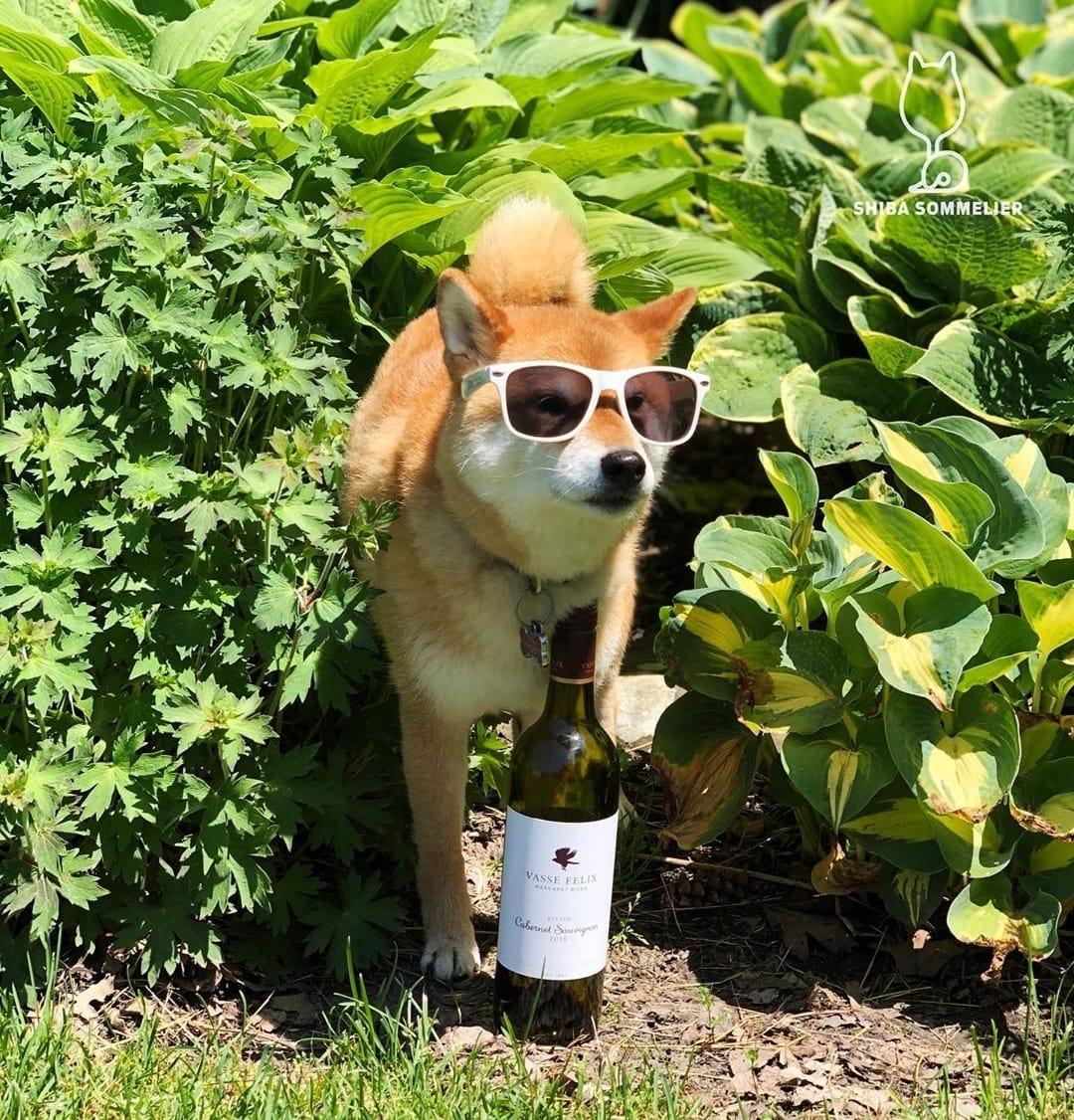 my favorite kind of wine selfie