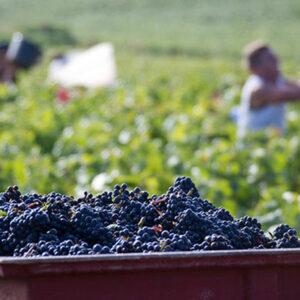 Photo from Vins de Bourgogne